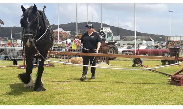 HORSE WORKING DISPLAY