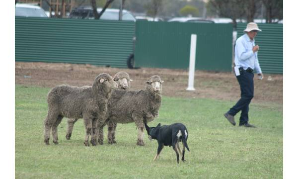 Sheepdog Arena Trial Information