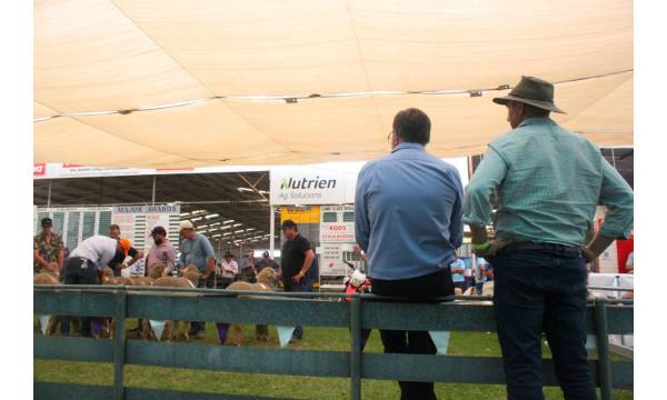 woolorama-public-meeting